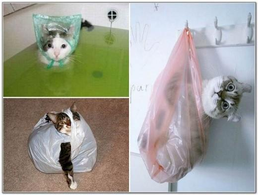 Cat And Bags 12