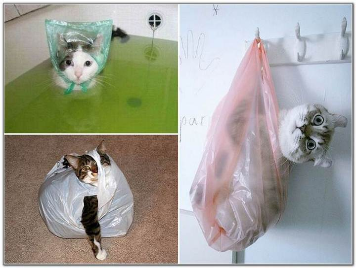cat-and-bags-12