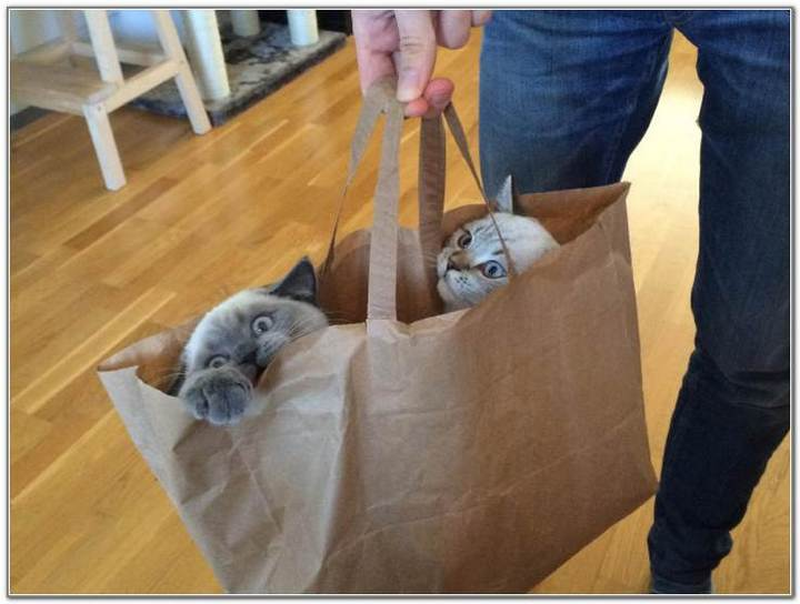 cat-and-bags-14
