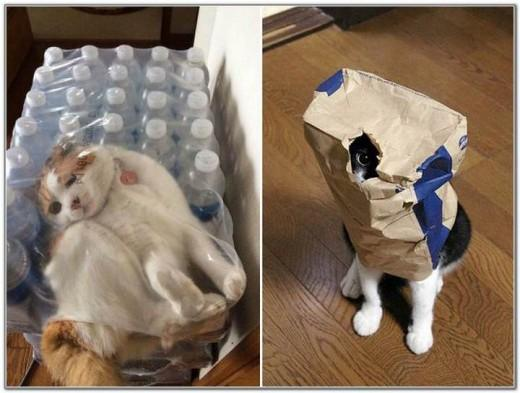 Cat And Bags 15