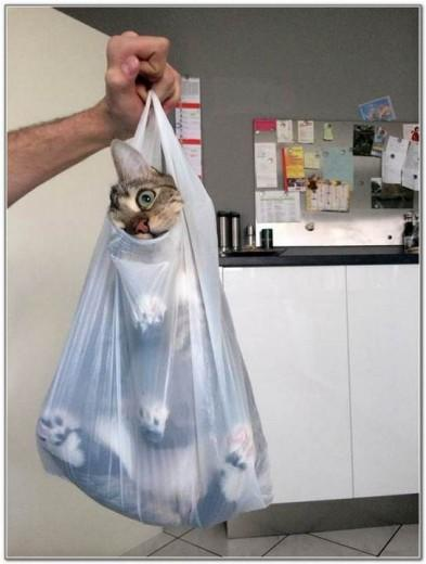 Cat And Bags 16