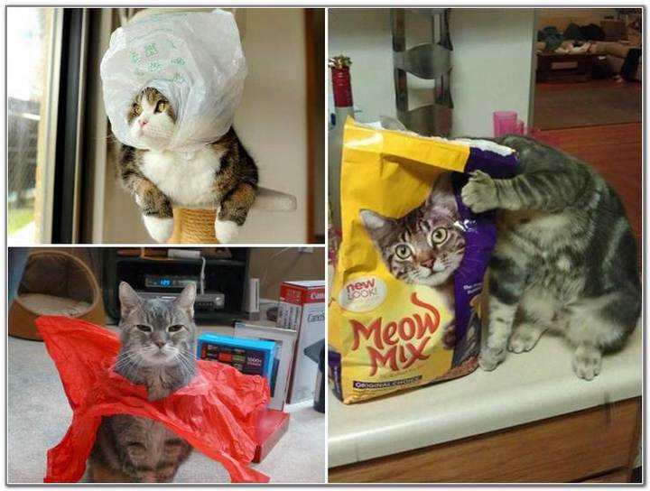 cat-and-bags-17