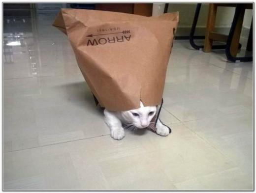 Cat And Bags 18