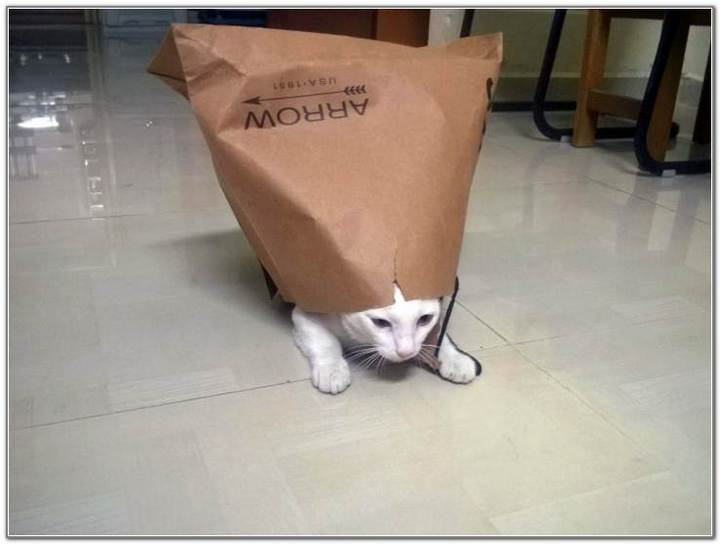 cat-and-bags-18