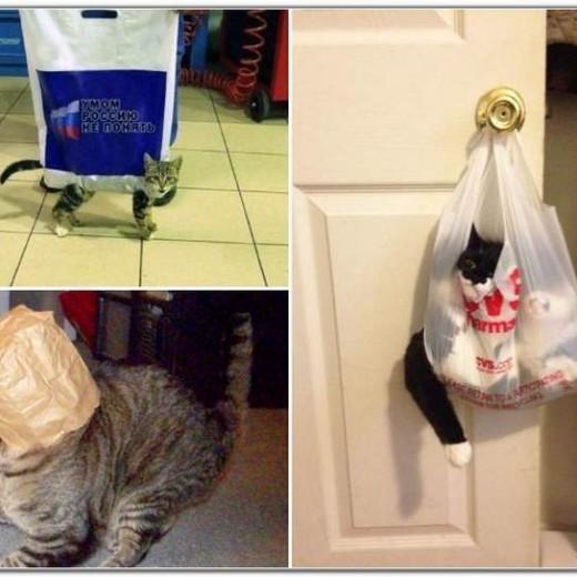 Γάτες και σακούλες - αστείες φωτογραφίες
