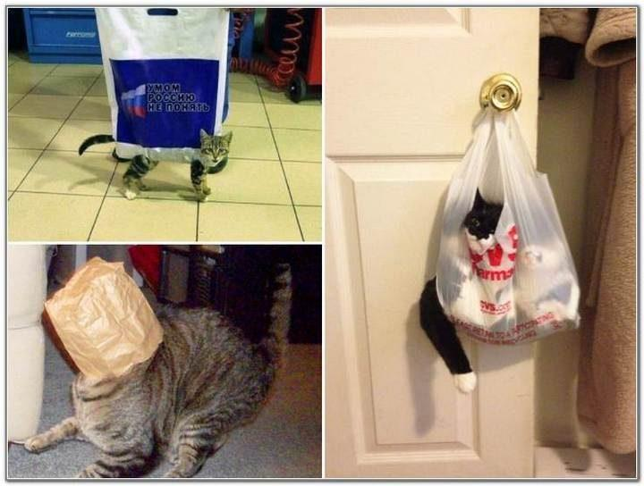 Cat And Bags 19